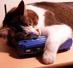 cat likes routers